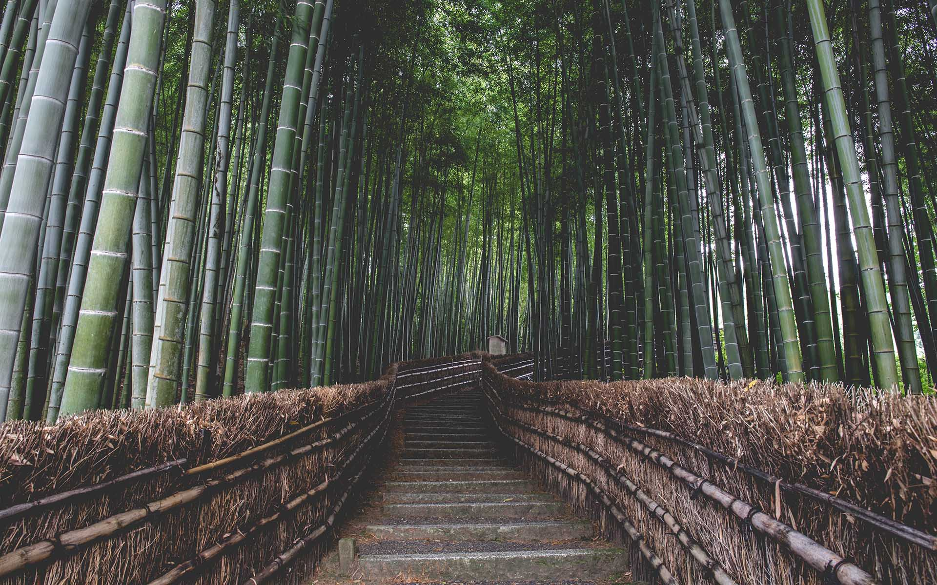 bconnected-blog-Bamboo in Architecture & Design
